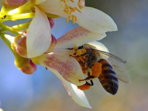 Bees and the healing properties of honey