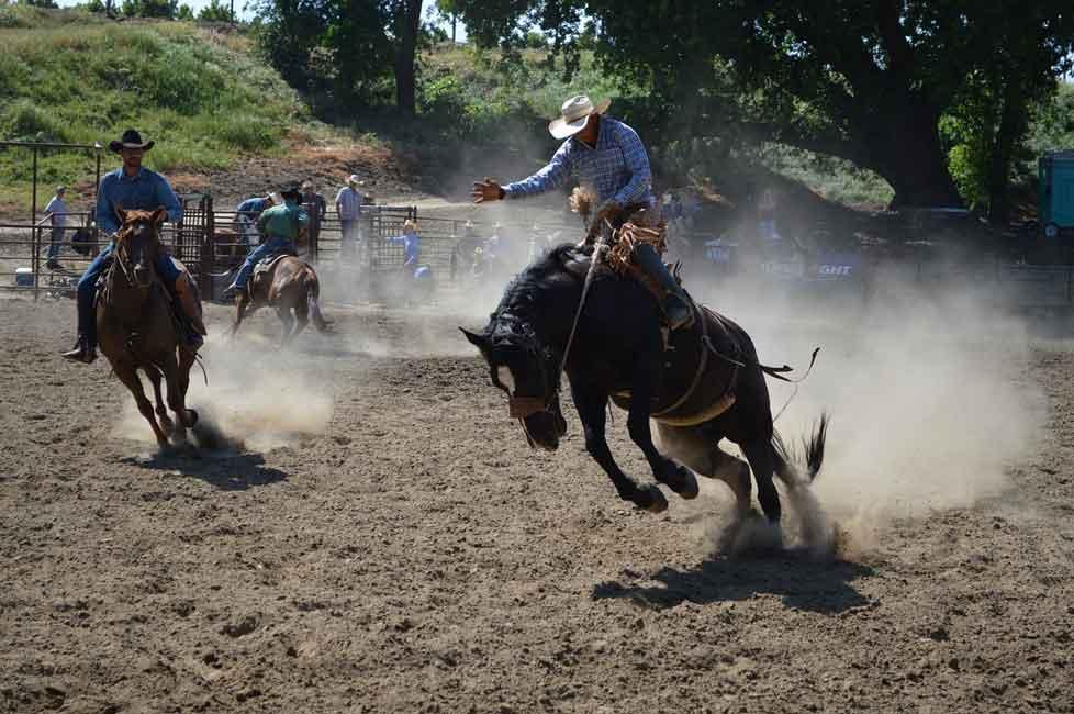 Rodeo habit bucking horse