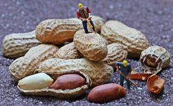 National Peanut Day Miniature men standing on peanuts